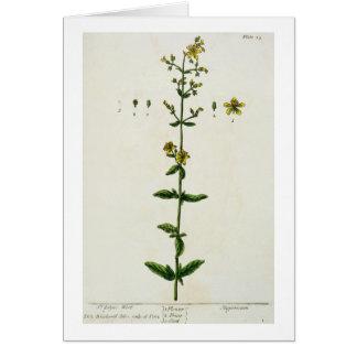 """La hierba de San Juan, platea 15 """"de un herbario c Tarjeta De Felicitación"""