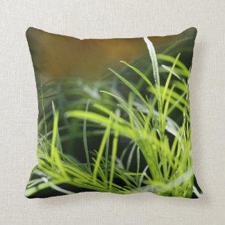 La hierba es siempre más verde… Almohada