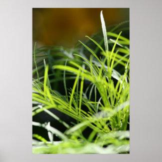 La hierba es siempre más verde… Poster