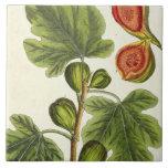 """La higuera, platea 125 """"de un herbario curioso"""", p tejas  cerámicas"""