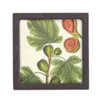 """La higuera, platea 125 """"de un herbario curioso"""", p cajas de recuerdo de calidad"""