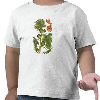 """La higuera, platea 125 """"de un herbario curioso"""", p camiseta"""
