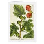 """La higuera, platea 125 """"de un herbario curioso"""", p felicitación"""