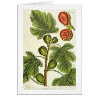 """La higuera, platea 125 """"de un herbario curioso"""", p tarjeta de felicitación"""