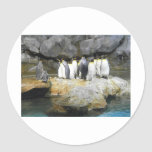 La historia del pingüino pegatina redonda