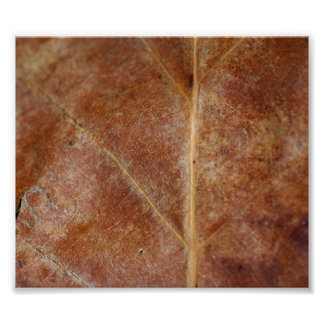 La hoja de Brown sale del árbol Fotografías