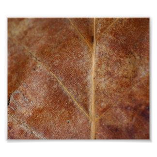 La hoja de Brown sale del árbol Fotos
