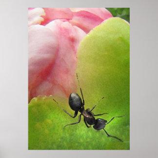 La hormiga y el Peony Impresiones
