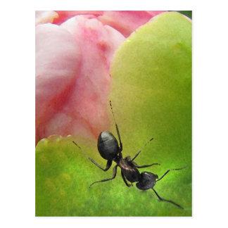 La hormiga y el Peony Tarjeta Postal