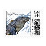 La iguana azul con el azul sale del fondo sellos