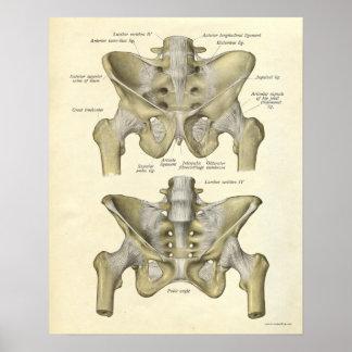 La impresión de la anatomía del vintage deshuesa l impresiones