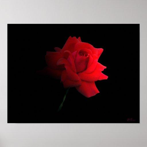 """la impresión del """"rosa rojo"""" de Paul tappenden Póster"""