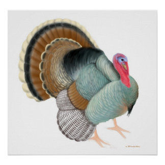 La impresión grande de Turquía Póster