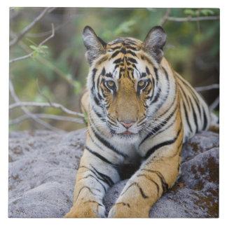 La India, parque nacional de Bandhavgarh, cachorro Azulejo Cuadrado Grande