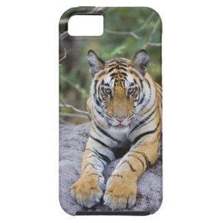 La India, parque nacional de Bandhavgarh, cachorro iPhone 5 Protectores