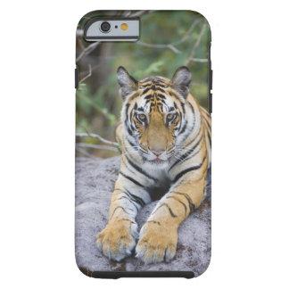 La India, parque nacional de Bandhavgarh, cachorro Funda De iPhone 6 Tough