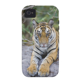 La India, parque nacional de Bandhavgarh, cachorro Case-Mate iPhone 4 Carcasa
