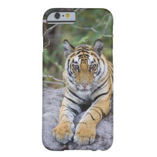 La India, parque nacional de Bandhavgarh, cachorro Funda De iPhone 6 Barely There