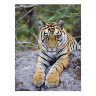 La India, parque nacional de Bandhavgarh, cachorro Postales