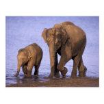 La India, parque nacional de Nagarhole. Elefante a Tarjetas Postales