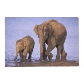 La India, parque nacional de Nagarhole. Elefante Salvamanteles