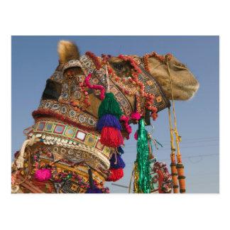 La INDIA, Rajasthán, Pushkar: CAMELLO DE PUSHKAR J Postales