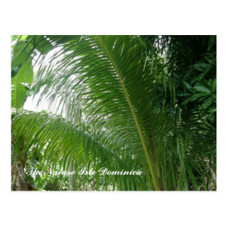 La isla Dominica de la naturaleza Postales