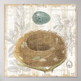 La jerarquía de un pájaro con un huevo decorativo póster