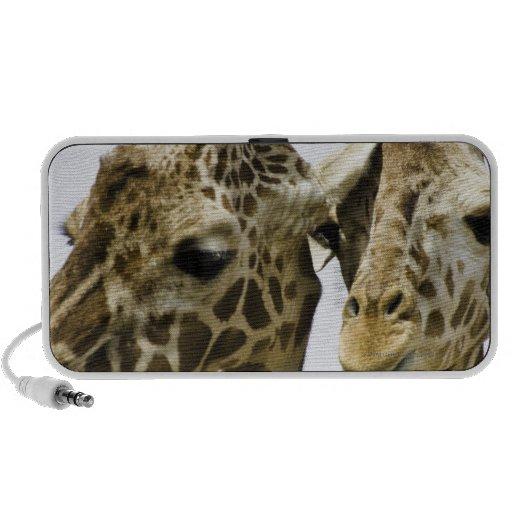 La jirafa conocida se deriva de la palabra árabe laptop altavoz