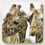 La jirafa conocida se deriva de la palabra árabe posavaso