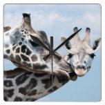 La jirafa de la madre besa su becerro reloj de pared