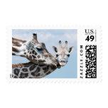 La jirafa de la madre besa su becerro sello