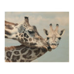 La jirafa de la madre besa su becerro impresión en madera