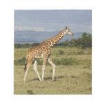 La jirafa de Rothschild, camelopardalis del Giraff Blocs