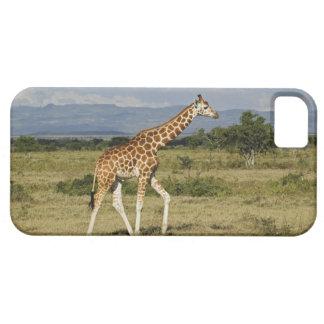 La jirafa de Rothschild, camelopardalis del Giraff iPhone 5 Case-Mate Cárcasa