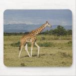La jirafa de Rothschild, camelopardalis del Giraff Mousepad