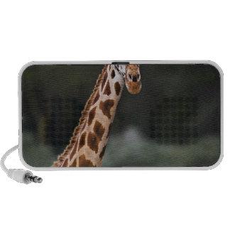 La jirafa de Rothschild, parque nacional de Nakuru Portátil Altavoces