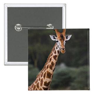 La jirafa de Rothschild, parque nacional de Nakuru Pins