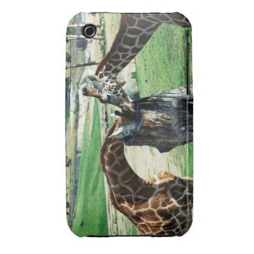 La jirafa hermana la caja de la casamata iPhone 3 cobreturas
