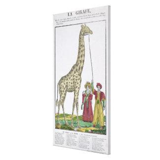 La jirafa presentada al rey impresión en lienzo