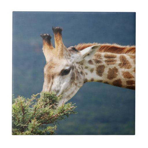 La jirafa que come alguno se va azulejo cuadrado pequeño