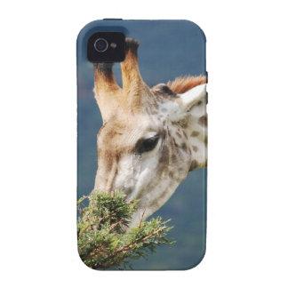 La jirafa que come alguno se va iPhone 4/4S carcasa