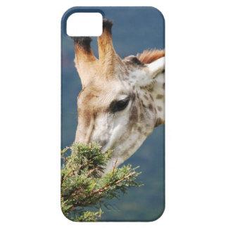 La jirafa que come alguno se va iPhone 5 coberturas