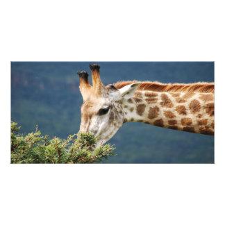 La jirafa que come alguno se va tarjeta fotográfica personalizada