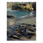 La Jolla Cove Beach Waves Sand Seals Postcard