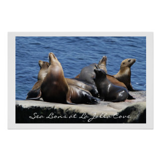 La Jolla Cove Sea Lions Print