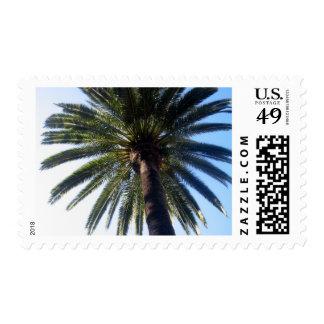 La Jolla Palm Stamp