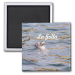 La Jolla Seal 2 Inch Square Magnet