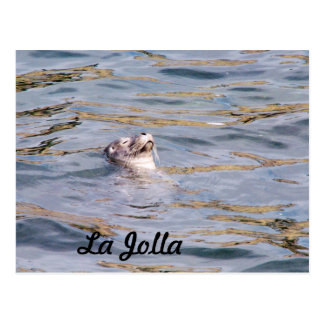 La Jolla Seal Postcard