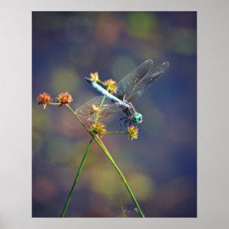 La joya azul, una libélula minúscula descansa póster